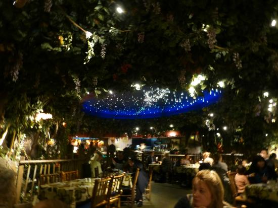 Birthday lady picture of rainforest cafe london for Rainforest londra
