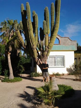 Hacienda Del Sol: Great cactus!