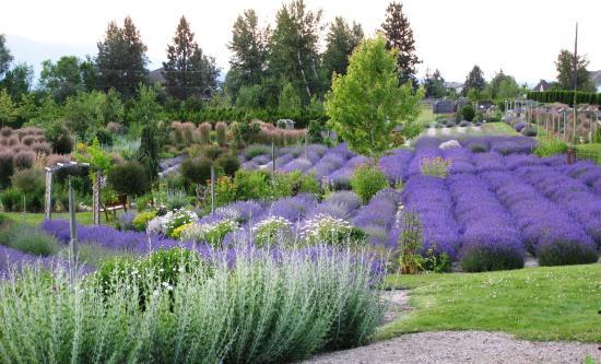 Okanagan Lavender Herb Farm