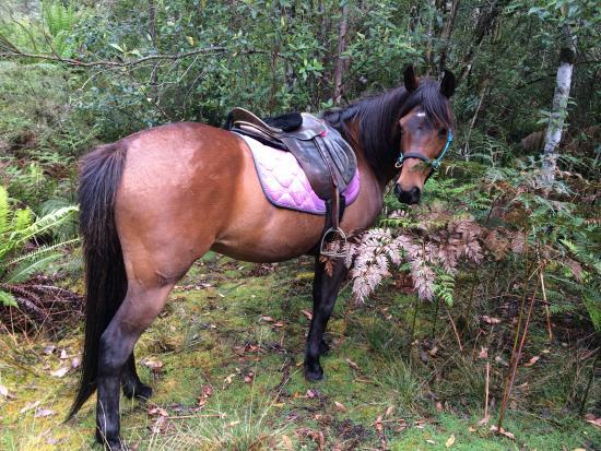 Horse-Haven Farmstay: La douce, la belle