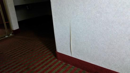 BEST WESTERN PLUS Executive Suites: Just the separation of the wall paper seam. Looks bad.