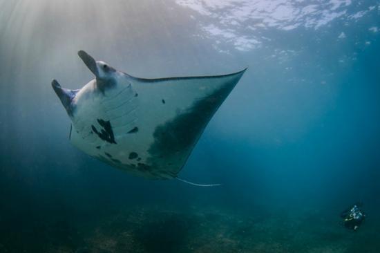 Bali Hai Diving: Manta Ray Nusa Penida