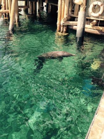 U Coral Beach Club Eilat: le delphinarium