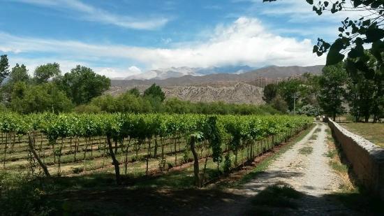 Sala de Payogasta: El viñedo