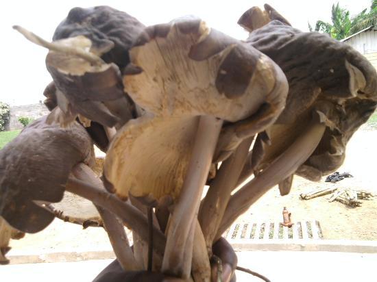Guinea Ecuatorial: Alimento proferido