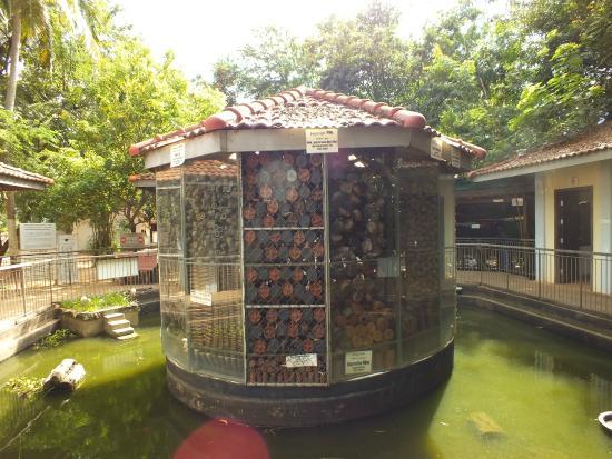Display - Picture of Cambodia Landmine Museum, Siem Reap ...