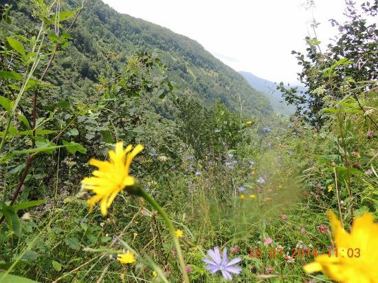 Giresun, ตุรกี: Güdül köyü dereli
