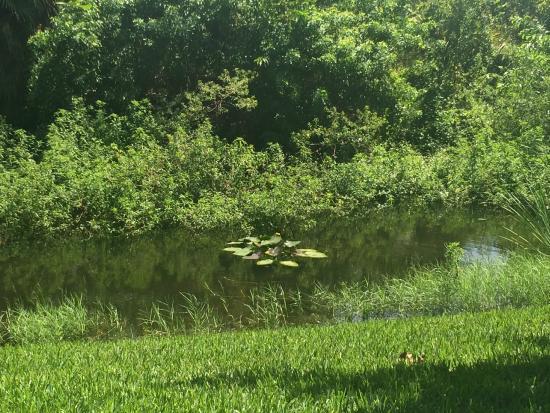 Courtyard West Palm Beach: Creek behind the hotel