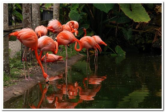 Davie, FL: Flamingo Pond