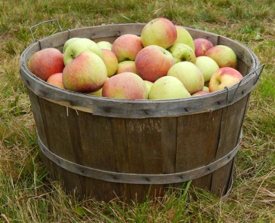 Cardigan Mountain Orchard: Just picked!