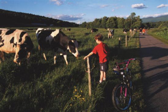 Innsbruck Inn At Stowe: LFBike Path Biking Boywith Cows