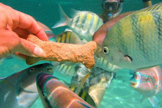 Feeding Fish at Coki beach - Picture of St.Thomas Scuba ...