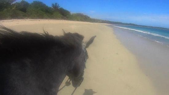 Natadola Beach : Montar a caballo (Riding horse)