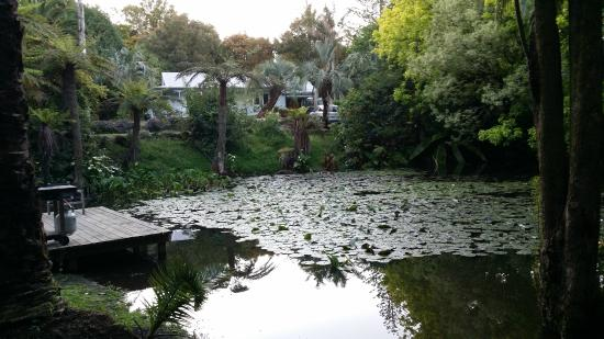 Central Cottages : Pond on the property
