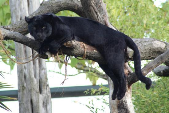 Bear - Picture of Chester Zoo, Chester - TripAdvisor