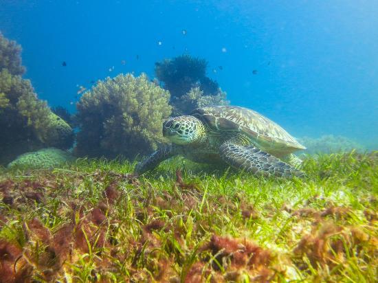 Best Dive Sites Around Panglao Island