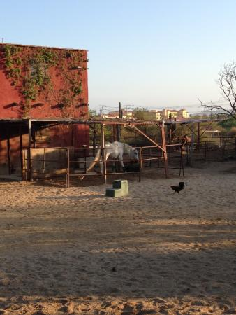 Cuadra San Francisco : the stables