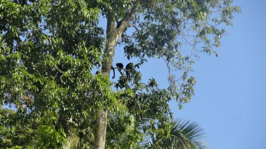 Monkey Island : Howlers