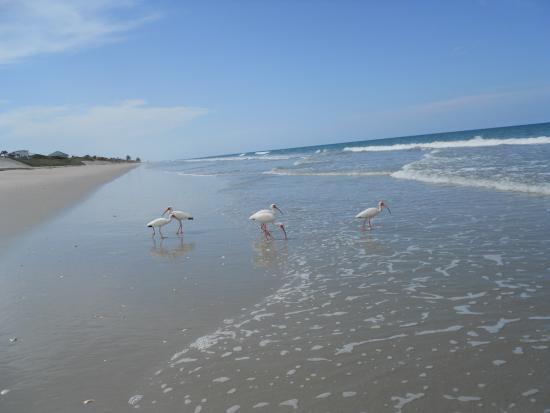 Turtle Run Oceanfront Suites: wild life
