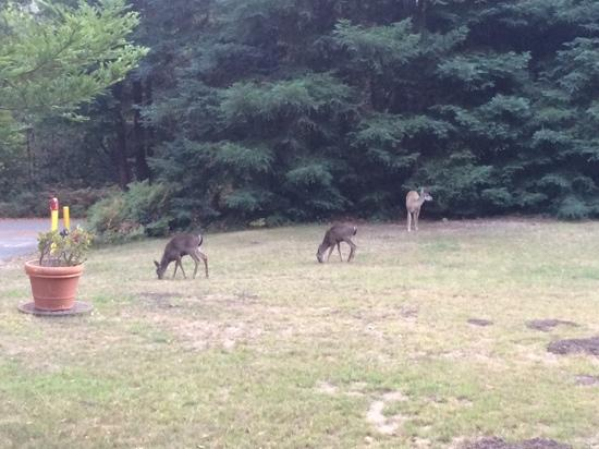 Big Sur Lodge: some of our neighbours!