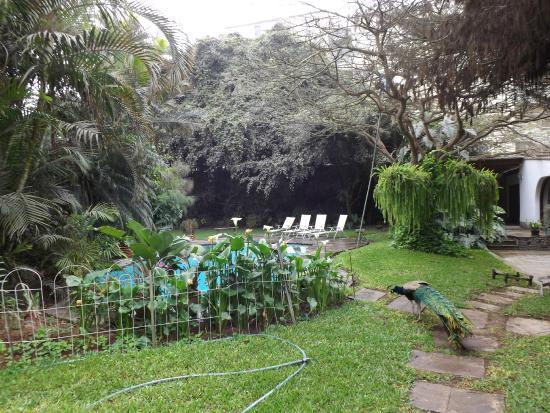 Posada Monterrico: garden area