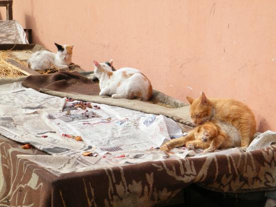 Mellah, quartiere ebraico a Marrakech