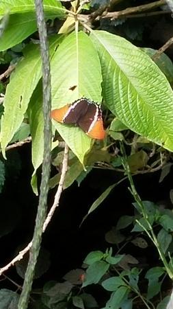 Monteverde Theme Park: Papillon