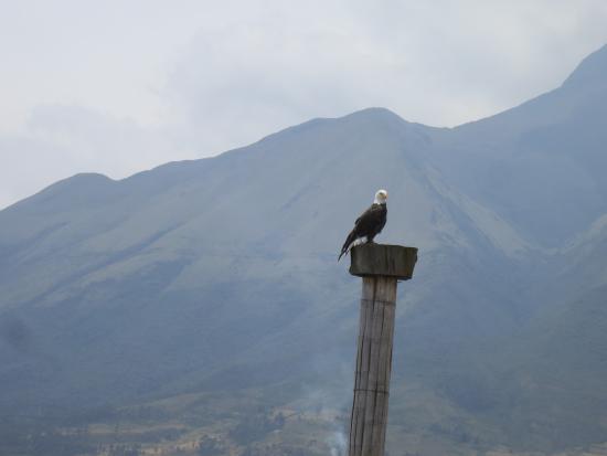 Condor Park