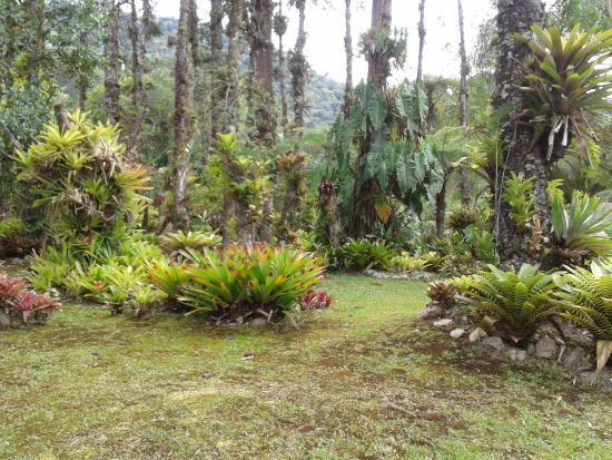Pousada Jardins do Passaredo : jardim
