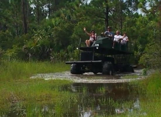 Everglades Swamp Buggy Adventures