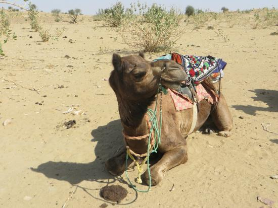 The Real Deal Rajasthan Camel Safari: Time for rest