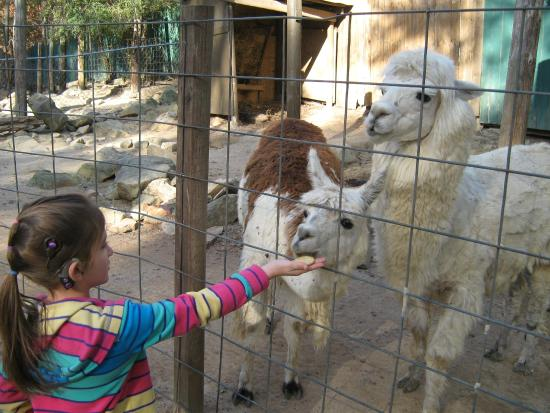 Yellow River Game Ranch: Alpacas