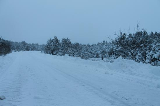 Forest Edge Bed and Breakfast: The lane to Forest Edge B&B, with pine trees covered in a blanket of snow