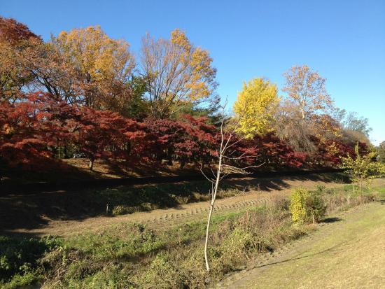 Nogawa Park : nogawa