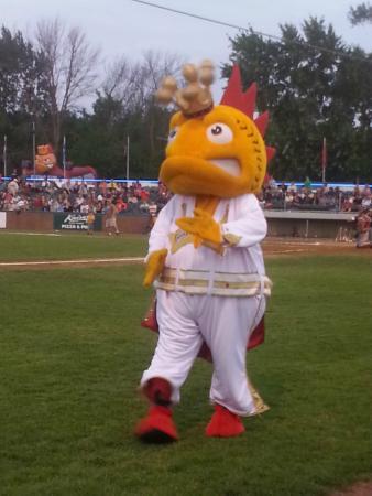 Kenosha Kingfish Baseball