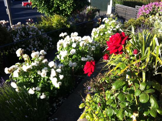 Hazel House Boutique Bed & Breakfast: Roses looking a treat