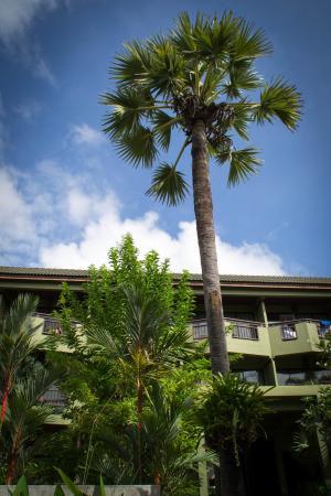 Phuket Island View : Корпус, к которм мы жили