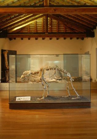 Museo la Terra e l'uomo