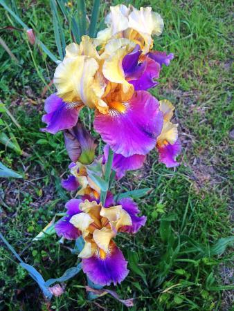 Iris foto di giardino dell 39 iris firenze tripadvisor - Giardino dell iris firenze ...