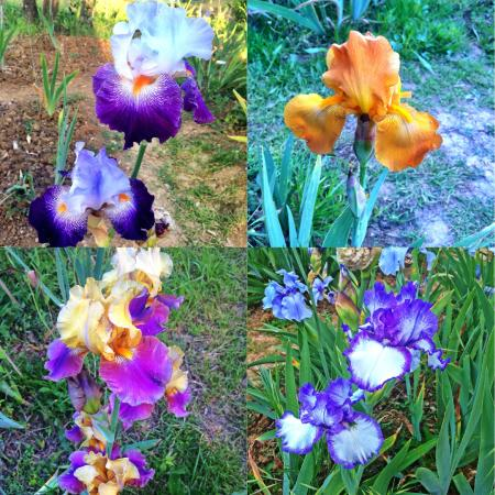 Iris foto van giardino dell 39 iris florence tripadvisor - Giardino dell iris firenze ...
