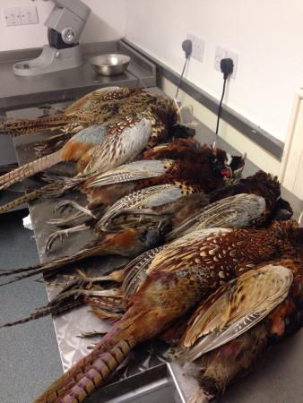 Upstairs @ Joe's: It's Pheasant time of year!!!