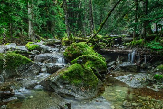 Skykomish, WA: Nature trail at Deception Falls
