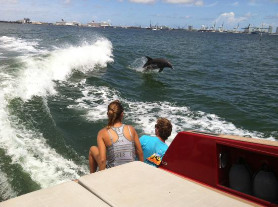 Blue Infinity Charters : Dolphins too!