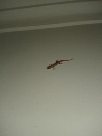 Viceroy Holiday Resort: Small guests - lizards.