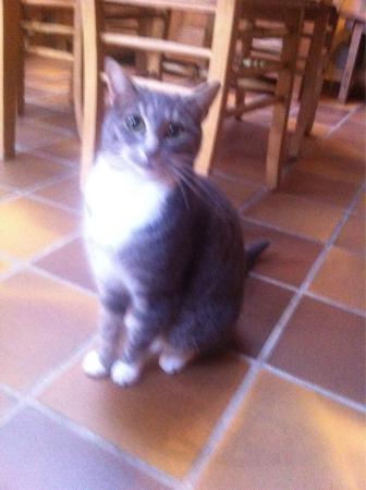 Agnes Delrue B&B: Lovely cats :)