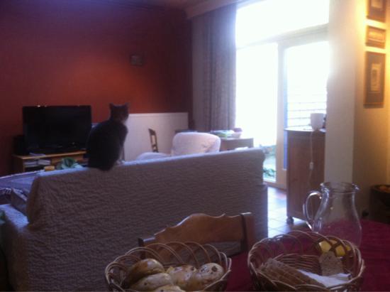 Agnes Delrue B&B: Breakfast/lounge/cat