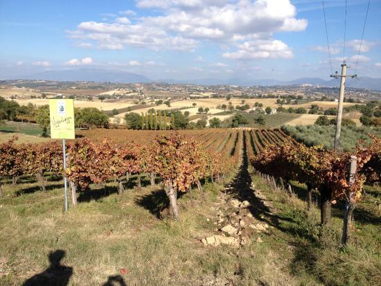Moretti Omero: Great view!