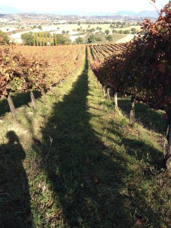 Moretti Omero: La Vigna Lunga - The Long Vineyard