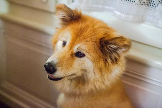 Les Airelles: Amazing dog Tasha