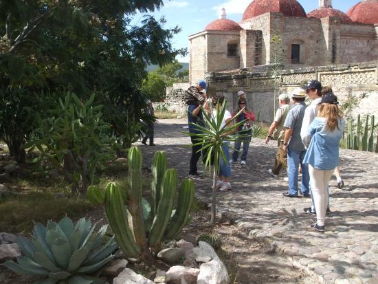 El Tule Tree of Life, Teotitlan Village, and Mitla Ruins Tour: à l'arrière-plan le groupe de l'église